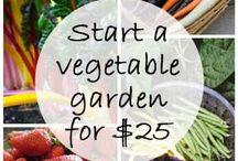 Grow Your Own Victory Garden / by Lauren Linck