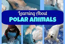 Polar animals / by Natalie NG