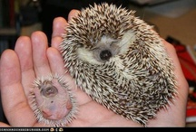 Cute Critters  / by Holly Hayden