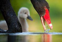 Matka Natura i Jej Dzieci