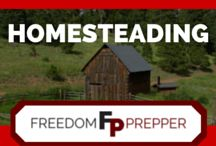 Homesteading / Homesteading DIY, Skills and How To's for the homestead. Best homemade recipes and preparedness tips for homestead survival. Homestead DIY projects and self reliance ideas for survival. Cool tutorials with step-by-step instructions for off the grid, preparedness. Gardening, farming, cooking, canning, livestock, natural health, craftsmanship, homemaking skills and more.
