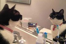 MOL! / Feline funnies - just don't laugh at them while your cat is in the room.