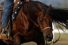 The World of Horsemanship <3 / by Monica Stewart
