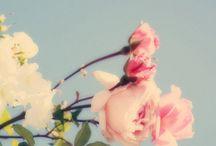 Blooming / inspirational for bedlinen