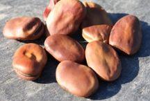 Semis / Semis au jardin potager