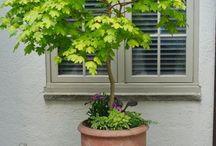krukketræer