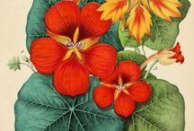 rysunki kwiatów