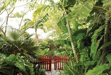 Gardens & Outdoor Spaces / Beautiful green spaces which provide inspiration for the gardens I design.