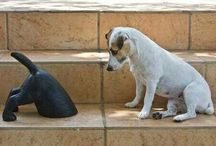 dogs & C.