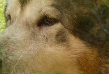 Hondeninfo