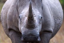 Endangered species / Because of human's,  these animals are disappearing