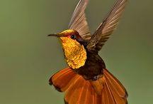 Humming Birds  / by Trudy Allen