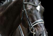 Horse Majesty
