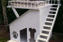 Dog Days and Houses