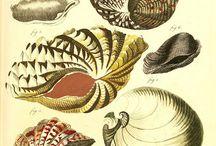 Shell prints / Ракушки в рисунке