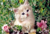 Cats / Cute pics of cats