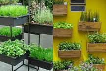 Herbs and Herbal Gardens