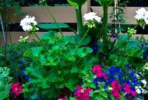 Flower pots / Stunning flower pots by our designer Alisha