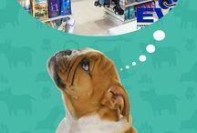 Tienda de mascotas EVI / En nuestra tienda podrás encontrar los mejores productos y accesorios para tu #mascota; es nuestro deseo marcar una diferencia con nuestra atención y la calidad en nuestras líneas de #alimentos, #juguetería y #moda.
