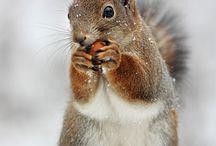 Cool Squirrels for Daniel