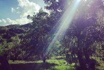 my blog ~jurnal~