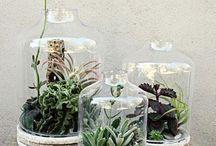 Giardini in vetro