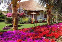 Flower displays around the home / I'm a full blown plantaholic...I also have separate board's on: Gardens around the world, Plants - shrubs and succulents,Trees of all sizes, Waterfalls - ponds - lakes and water features, flowers of the world, and Mushrooms - ferns and forest dwellers!
