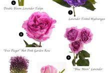 Цвета и цветы
