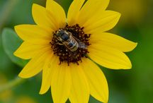 Smithsonian Photo Contest 2015 - T.R. Graves's Entries / by T.R. Graves, Author