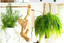 Planters life