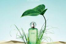 Fragrance. Oh, my dear!