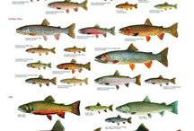 Fishing ❤️