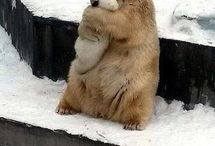 SAVE POLAR BEARS NOW!!! / Polar bears are starving to death, please let's help save them now!