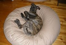 Boxer / Lots of Boxer and Boxer X;s on their lovely Barka Parka pet beds