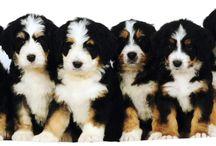 My dream dogs / So cute