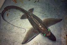 Deepsea creatures
