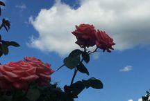 ❁ flowers ❁