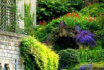 Garden, kert