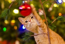 Happy Howl-meowidays! / Pets participating in the holidays
