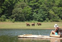 3 Days Kerala Holiday package for Rs 6000. / http://travelgowell.in/kerala-holidays/3-days-kerala-tour-packages/thekkady-kumarakom.html.3 Days Kerala Holiday package for Rs 6000.covering Thekkady & Kumarakom.