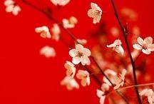 Inspiration of Japan