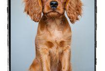 Pets / by Ann Crowder