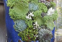 Succulents / by Robin Follette
