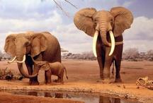 Elephants / by Funkface Eam