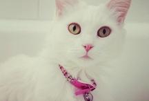 Kitty! / by Alexandra Bueno