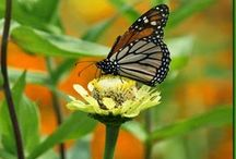 Butterfly Garden / Ideas for attracting butterflies to your garden