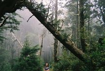 Wandering In The Woods / by Lydia Billman