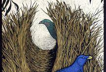 Birds - Bower Birds/Birds Paradise