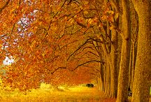 Autumn-Herfs