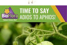 BioFlora Lawn & Garden Care